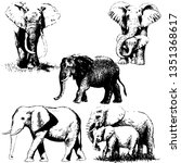 elephant hand drawn vector... | Shutterstock .eps vector #1351368617