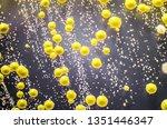 bacteria grown from skin smear  ... | Shutterstock . vector #1351446347