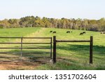 fencing h brace and gate on a...   Shutterstock . vector #1351702604