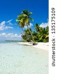 caribbean beach and palm tree | Shutterstock . vector #135175109