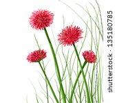 Beautiful Wild Flowers...