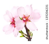 Pink Almond Blossoms On A...