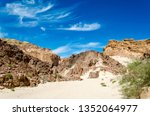 green bushes on the sand in a... | Shutterstock . vector #1352064977