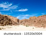 green bushes on the sand in a... | Shutterstock . vector #1352065004