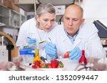 scientific researching in... | Shutterstock . vector #1352099447