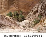 green palm trees in an oasis in ... | Shutterstock . vector #1352149961