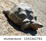 Stock photo the aldabra giant tortoise aldabrachelys gigantea from the islands of the aldabra atoll in the 1352362781