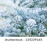 Branches Of Blue Spruce Is...