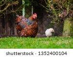 ground level  shallow focus... | Shutterstock . vector #1352400104