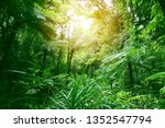 tree canopy in tropical jungle    Shutterstock . vector #1352547794