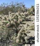 desert cactus wild | Shutterstock . vector #1352586311