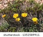 spring yellow blooms | Shutterstock . vector #1352589911