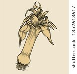 vector hand drawn plant in... | Shutterstock .eps vector #1352613617