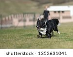 border collie dog. stroll.... | Shutterstock . vector #1352631041