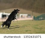 border collie dog. stroll.... | Shutterstock . vector #1352631071