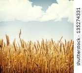nature background in vintage... | Shutterstock . vector #135274331