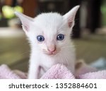 Stock photo cute white kitten with blue eyes on blurred blackground 1352884601