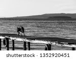 a dog on a pier over a a lake | Shutterstock . vector #1352920451