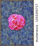 A Painting Of An Isolated Rose...