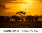 Large Herd Of African Elephant...