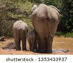 Three African Elephants Of...