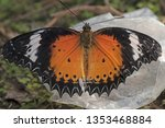inside of leopard lacewing wing ... | Shutterstock . vector #1353468884
