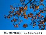 brilliant red   yellow  brown... | Shutterstock . vector #1353671861
