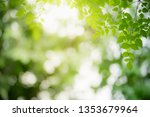 closeup nature view of green... | Shutterstock . vector #1353679964
