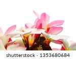 plumeria pink plumeria... | Shutterstock . vector #1353680684