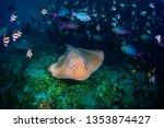 underwater shot of the stingray ...   Shutterstock . vector #1353874427