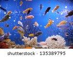 Colorful Fish In Big Aquarium