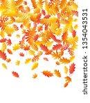 oak  maple  wild ash rowan... | Shutterstock .eps vector #1354043531