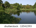 swampland at avery island... | Shutterstock . vector #13541593