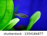 Freshwater Aquarium Fish  The...