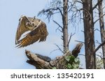 barn owl perched on a tree stump | Shutterstock . vector #135420191