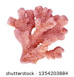 coral isolated on white... | Shutterstock . vector #1354203884