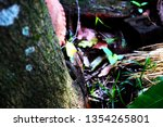 lizard on tree the lizard... | Shutterstock . vector #1354265801