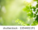 closeup nature view of green... | Shutterstock . vector #1354401191