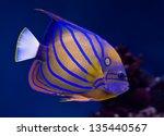 Sea Life  Exotic Tropical Cora...