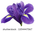 Purple Iris Flower  White...