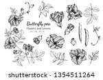 collection set of butterfly pea ... | Shutterstock .eps vector #1354511264