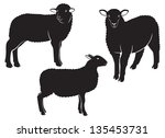The Figure Shows A Sheep