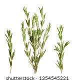set of fresh rosemary twigs on... | Shutterstock . vector #1354545221