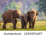 Family Of Elephants Walking...
