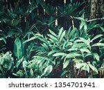 beautiful of green tropical... | Shutterstock . vector #1354701941