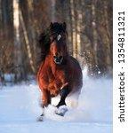 brown draft horse gallops... | Shutterstock . vector #1354811321