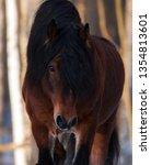 portrait of a brown draft horse ... | Shutterstock . vector #1354813601
