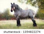 belgian draft horse in summer...   Shutterstock . vector #1354822274