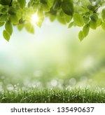 spring or summer season... | Shutterstock . vector #135490637