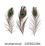 Peacock Feather Isolated On A...